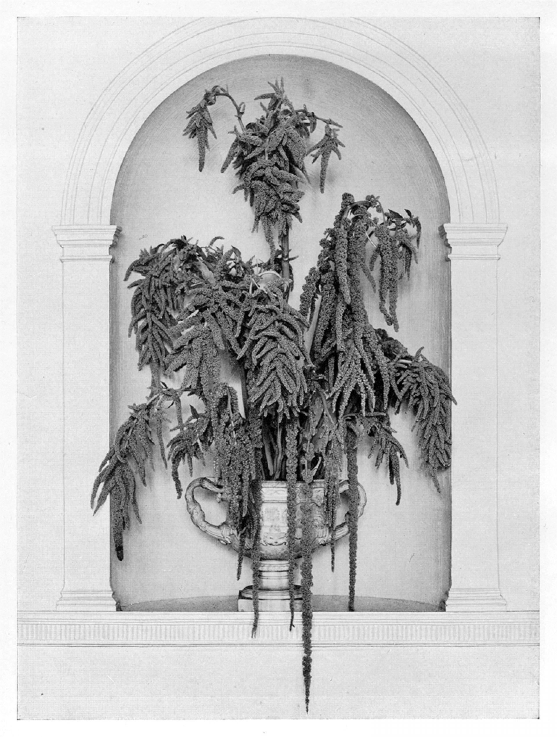 An artistic arrangement kvadrat interwoven warmick vase with green love lies bleeding constance spry in flower decoration j m dent reviewsmspy