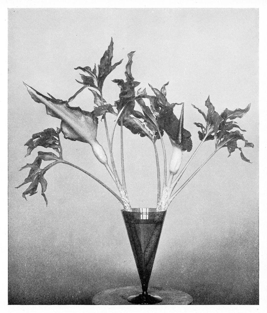 An artistic arrangement kvadrat interwoven dracunculus in glass vase constance spry in flower decoration j m dent sons reviewsmspy